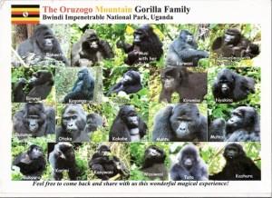 Oruzogo Gorilla Group Ruhija Bwindi gorilla trek gorilla tour