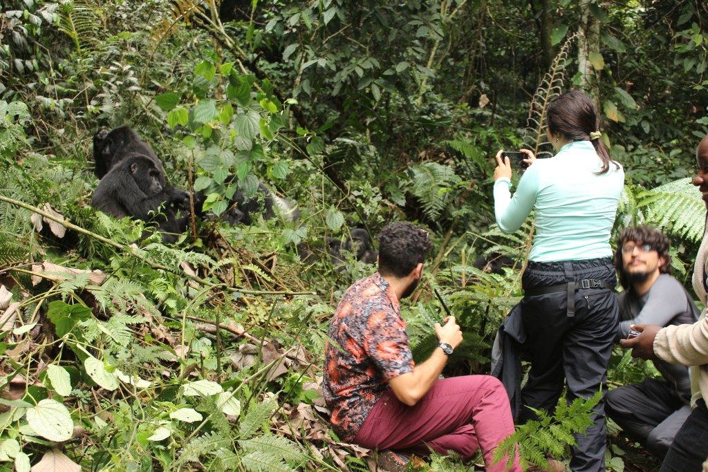 Tips for Gorilla Trekking - how to have the best gorilla trek in Rwanda
