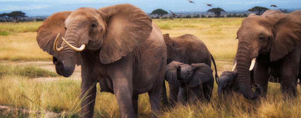 Maasai Mara and Gorillas Trek - Uganda Gorillas, BIG 5 Wildlife in Mara - 5 Days Safari