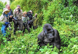 Best Time to go Gorilla Trekking in Rwanda – Best Time to see Rwanda Gorillas
