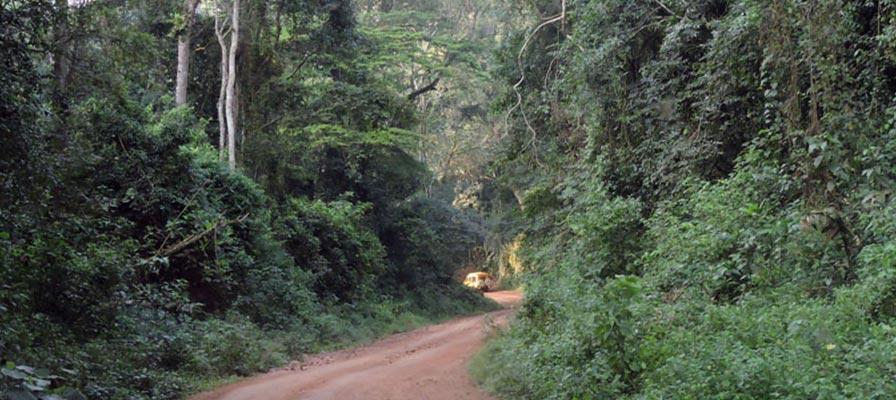 Kibale Forest National Par Safari
