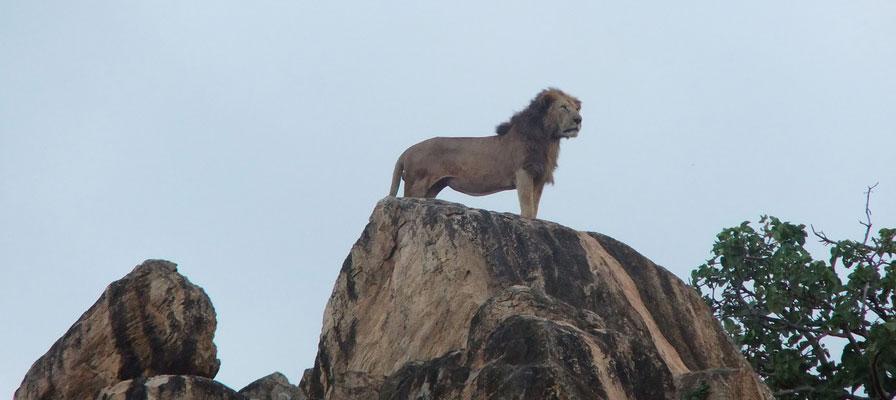 Kidepo national park safari