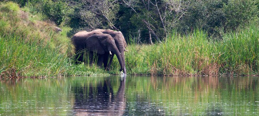 5 Days Muchison Falls National Park Safari