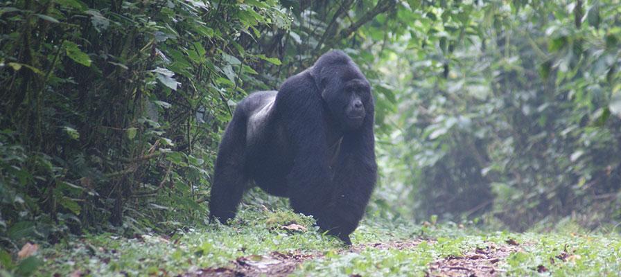 Gorilla Trek Africa & Uganda Wildlife Safari