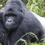 12 Day Uganda Safari - Gorilla Tracking, Wildlife Safari