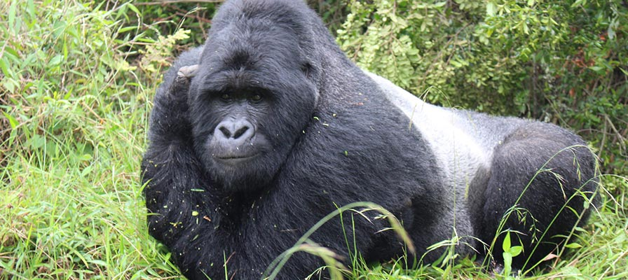 12 Day Uganda Safari - Gorilla Tracking, Wildlife Safari