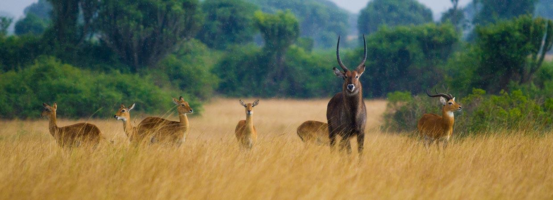 Visit Uganda National Parks
