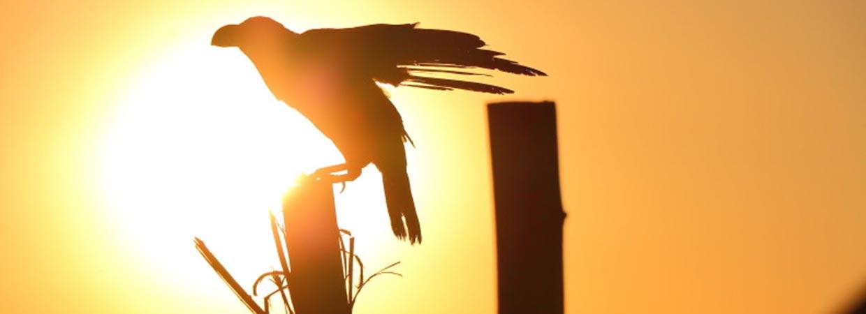 Uganda Birding Safaris, Birding Tours
