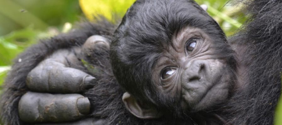 An infant in Bwindi Impenetrable National Park