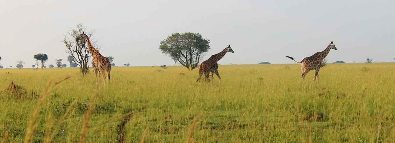 uganda wildlife safari park