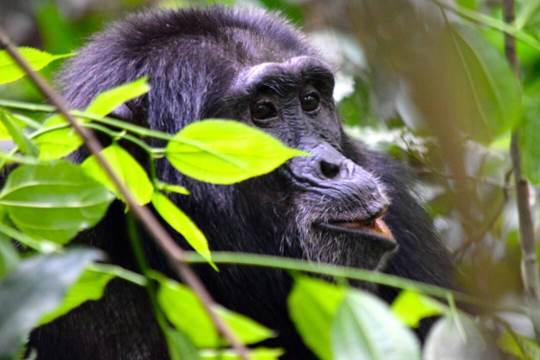 Uganda Rwanda Wildlife & Gorilla Safari