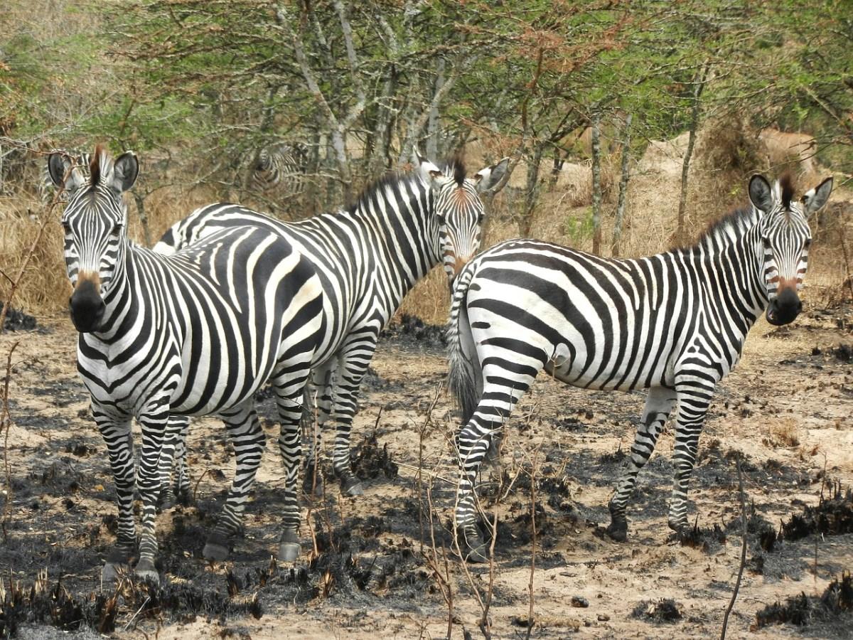 8 Day Mburo, Gorilla, Bunyonyi, Queen