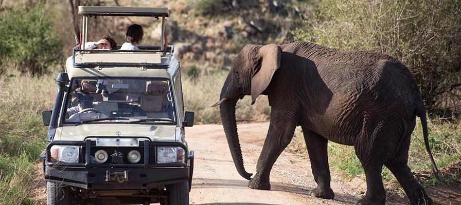 Uganda Primates & Wildlife Safari Game Drive