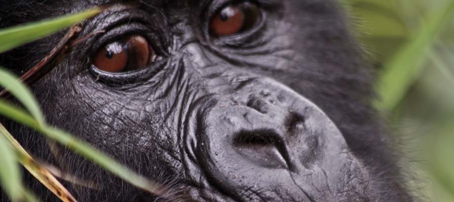 African Gorilla Tour & Savannah Safari