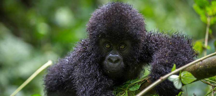 Uganda Primates & Wildlife Safari