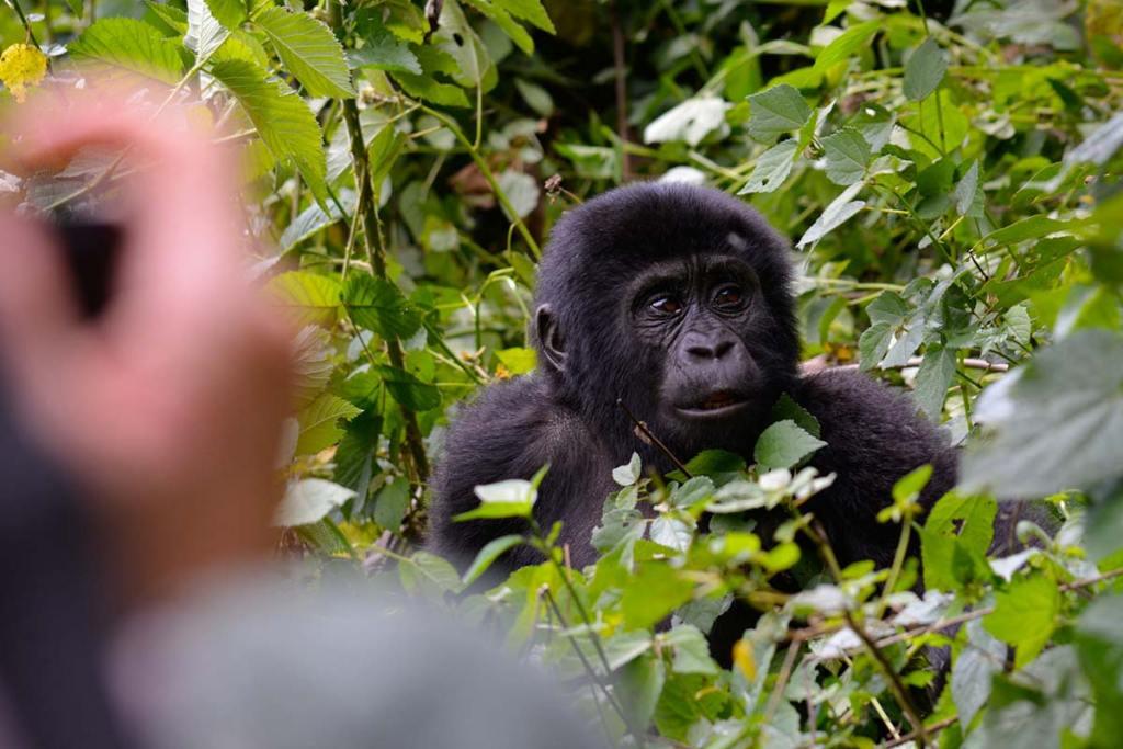 About Us - Saso Gorilla Trips Uganda Safaris