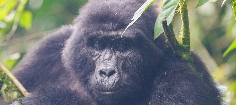 The Nile, Savannah & Rwanda Gorillas Safari Adventure