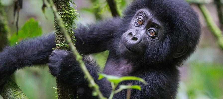 Uganda Primates Experiential Safari