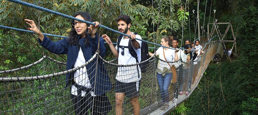 Nyungwe Forest Canopy walk.