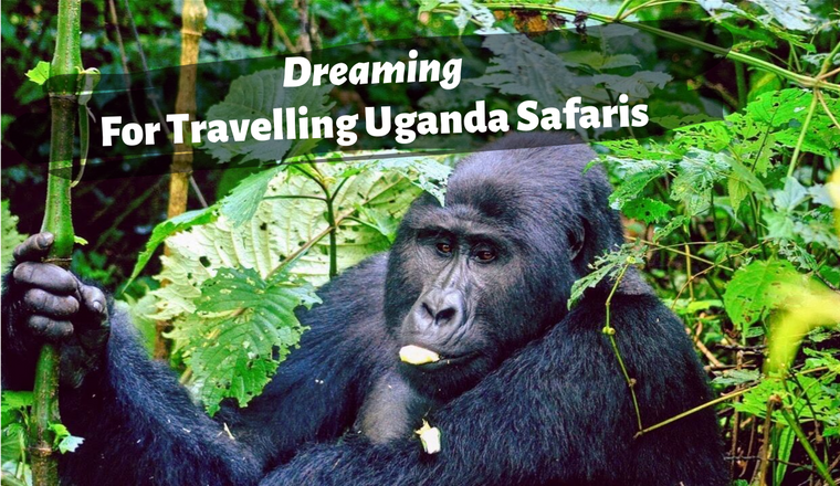 Best Time to Visit Uganda Safaris