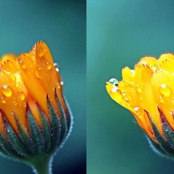 Contraste de selecciones en PhotoShop