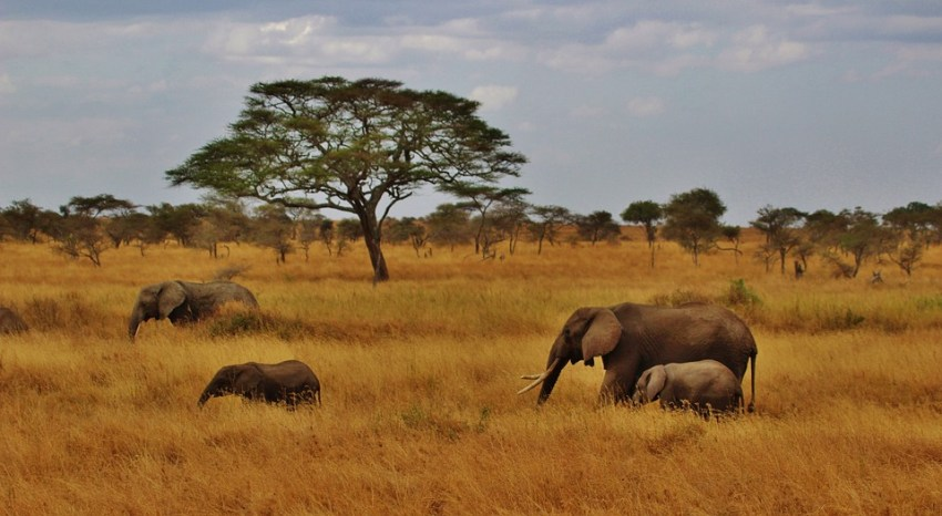 Tanzanian scenery