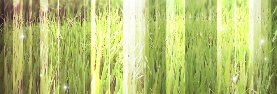 Grassy Field Website Banner