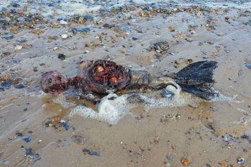 rotting-body-of-dead-mermaid-washes-up-on-british-beach-1