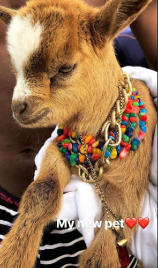 wizkid bought a gold chain for his goat