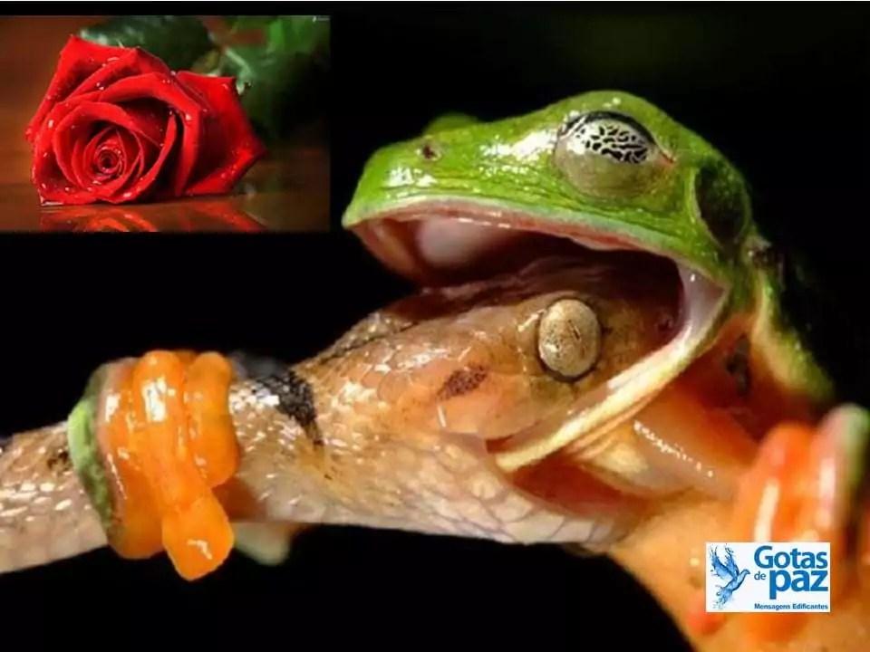 A Rosa, o Sapo e a Cobra