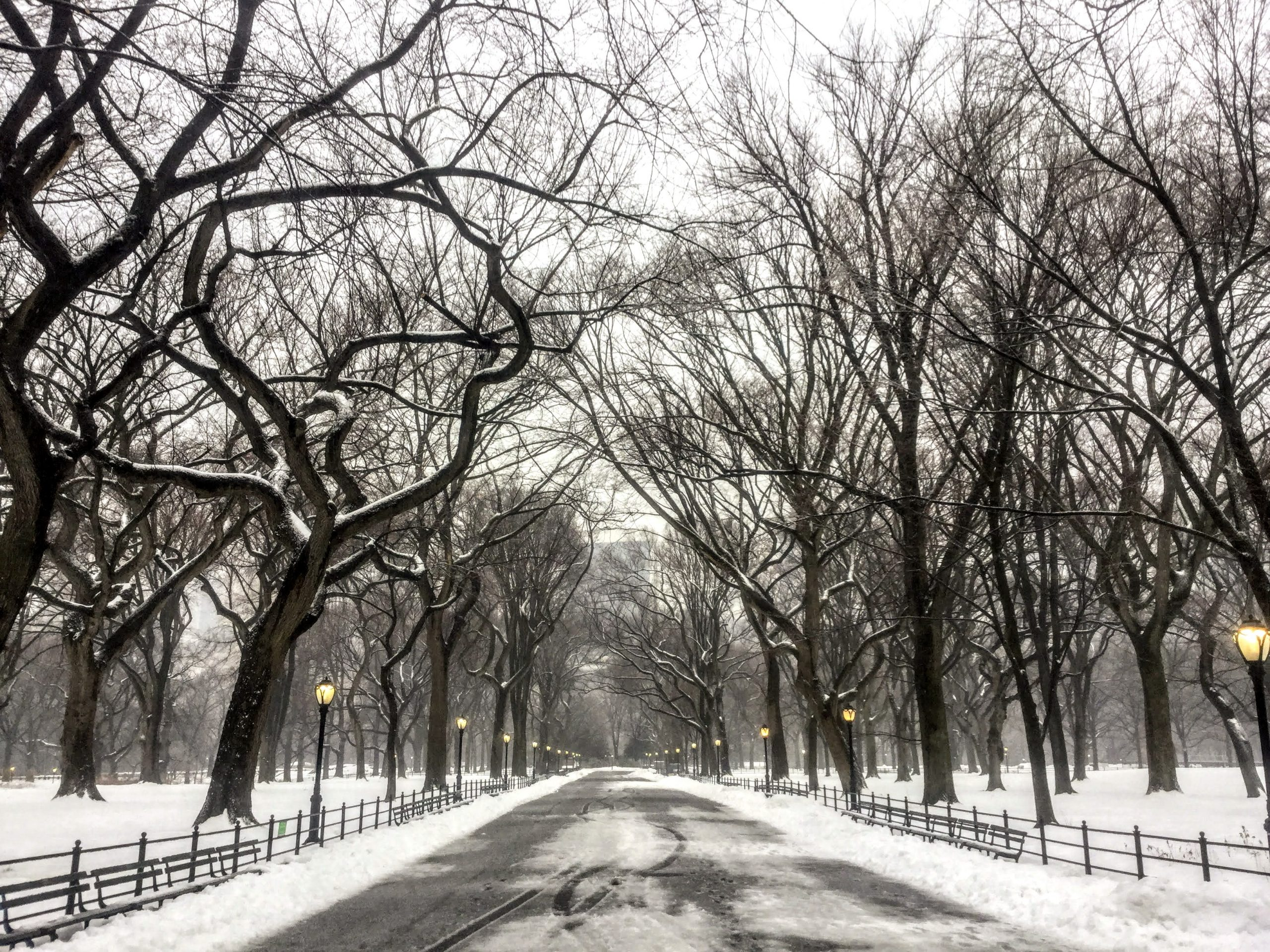 Central Park Mall in the Snow