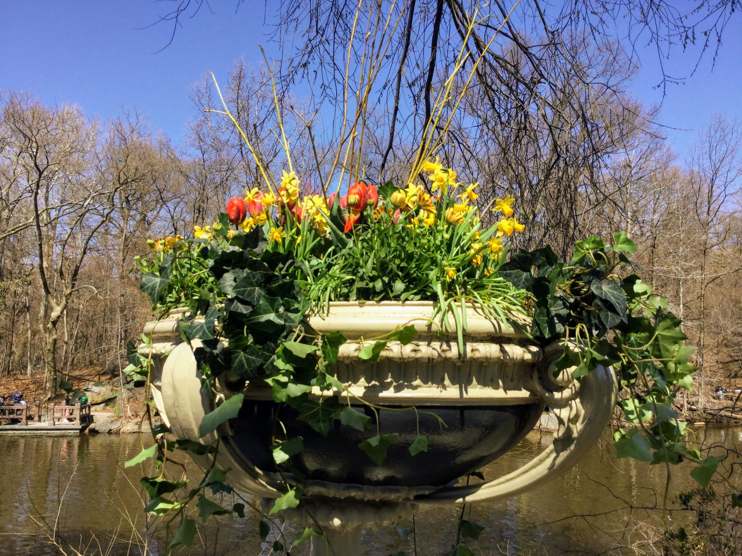 Bow Bridge in Central Park
