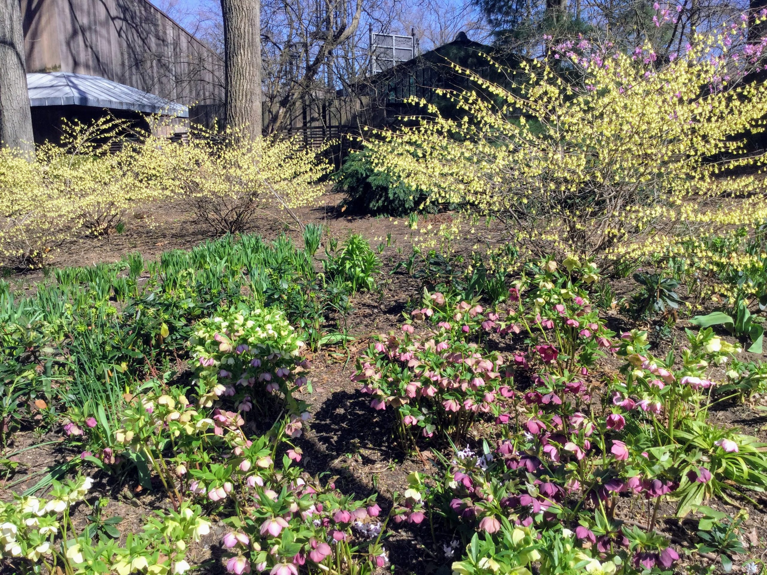 Signs of Spring in Central Park