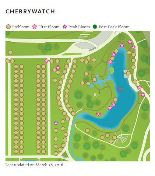 Cherry-blossom-watch.JPG