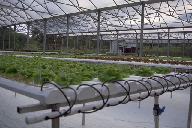 commercial hydroponic systems on Commercial Hydroponic Systems Design id=47126