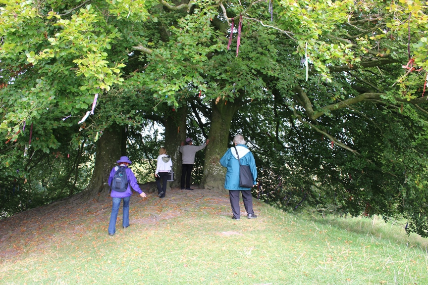 "The ""Tolkien"" trees Avebury"