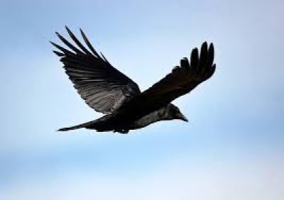 Let them soar