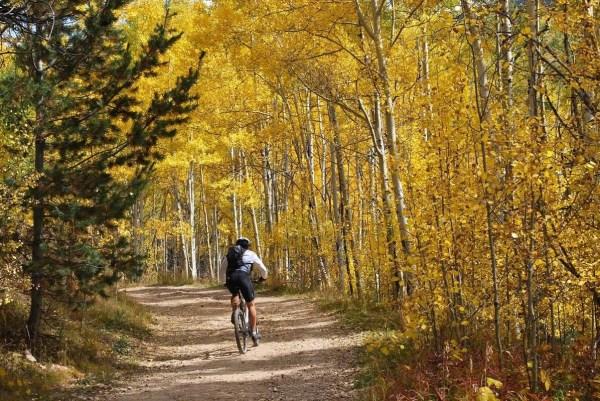 Fall Foliage Santa Fe New Mexico