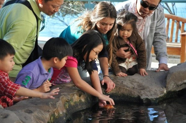 Tide-pools at Birch Aquarium at Scripps