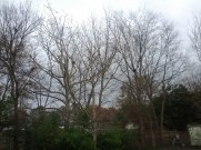 Galaxy Nexus Sample Photo 10 - No Flash - Outdoors