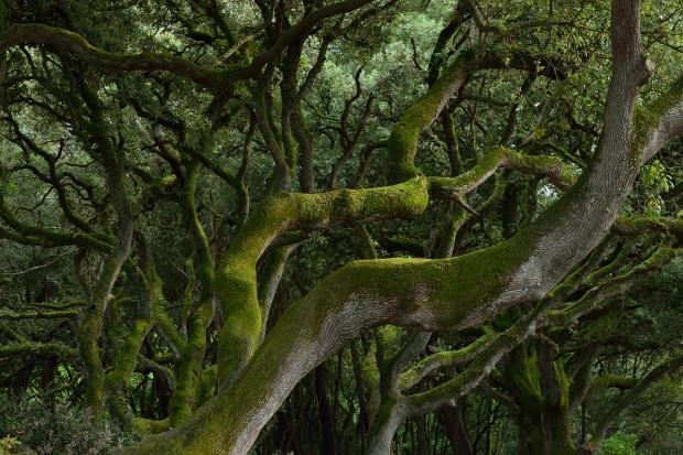 Nikon D800 Sample photo, image of tree