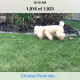 In iOS 7.0.3 users can easily delete bad photos in burst mode.