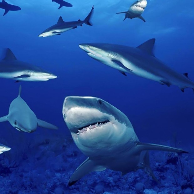 sharkseverywhere
