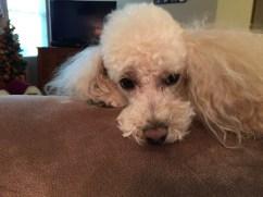 iPhone 6 Plus Sample - Puppy