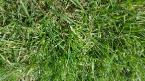 Note-5-grass