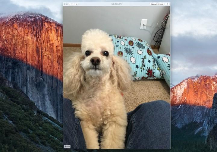 Live Photos on Mac