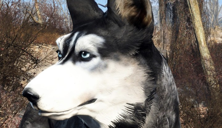 Dark Husky Dogmeat