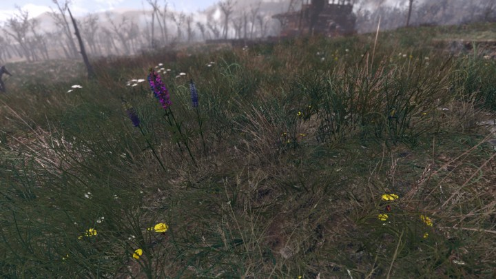 Spring in the Commonwealth
