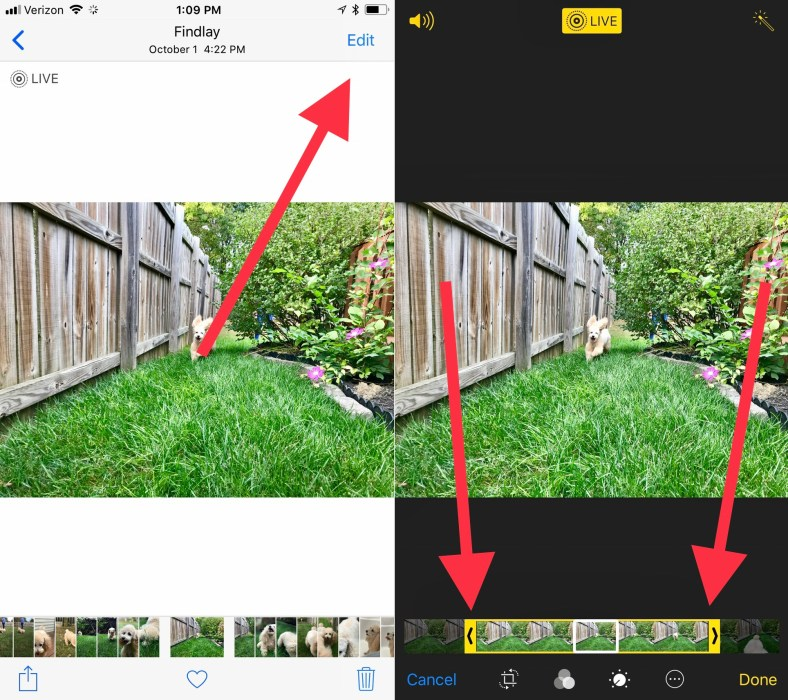 Make a Live Photo shorter or edit out an annoying movement.