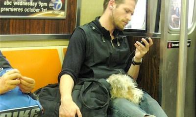 Sleepy Dog in New York Subway By Annie Mole on Flickr